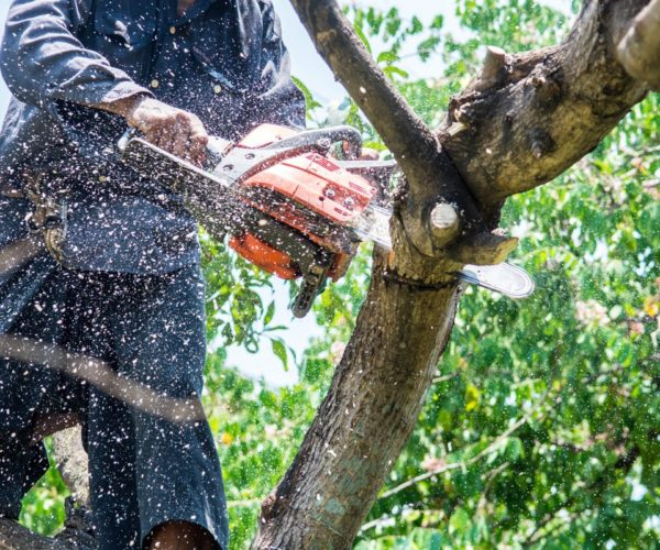 What Are The Signs You Need To Track Down For Tree Removal Melbourne