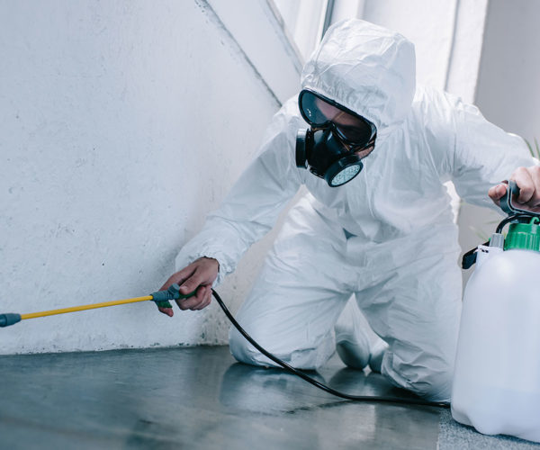 Check Out These Things Before You Rely Upon Any Pest Control Company
