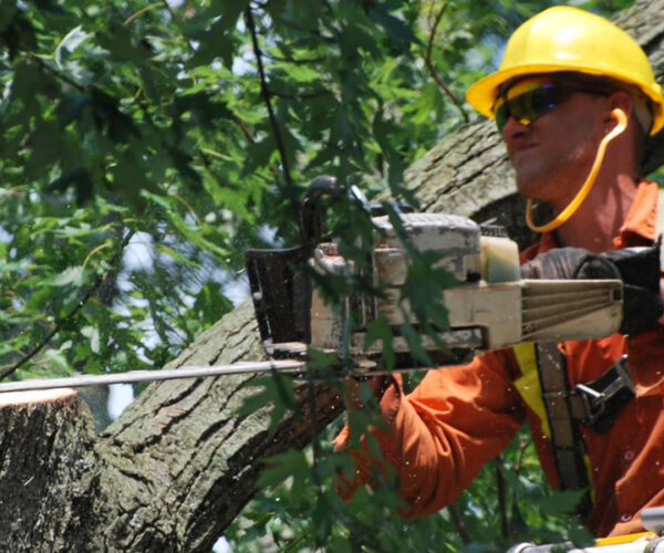 When Is It Necessary to Call an Arborist Immediately?